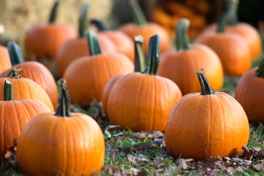 EXPLORE: Pumpkin Patch